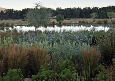 dds_project_wetland_1