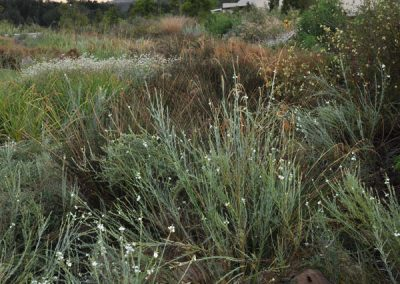 dds_project_wetland_3